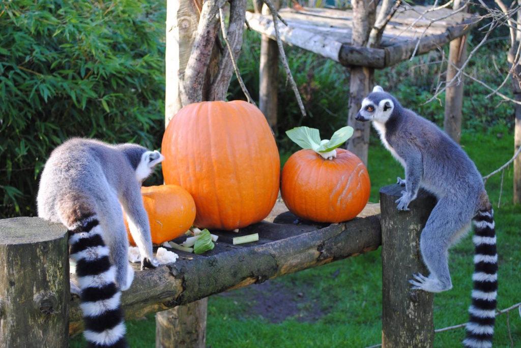 Zoo Weekly Calendar : Zoo boo halloween week newquay