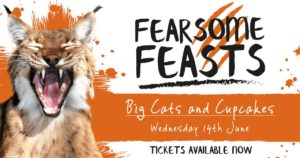 Fearsome Feasts - Big Cats and Cupcakes - Newquay Zoo