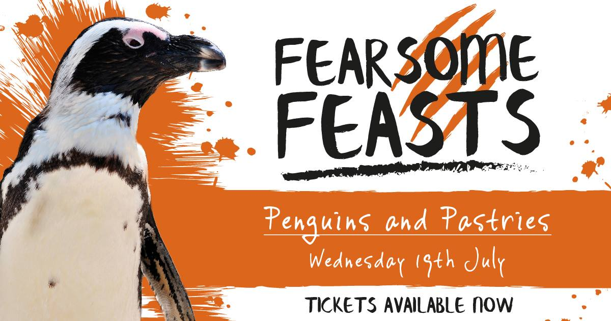 Fearsome Feasts Penguins and Pastries - Newquay Zoo